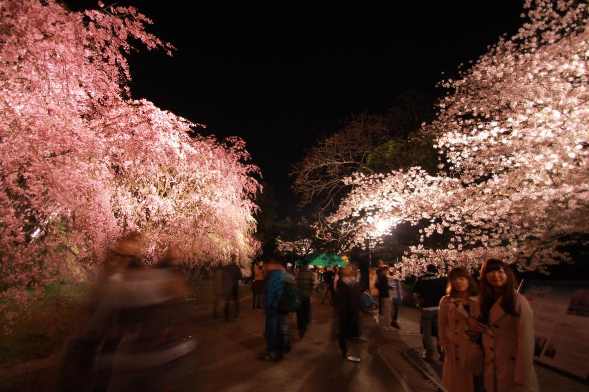 01 Sakura Falls (滝桜)